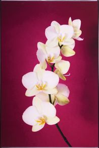 Fuschia orchid wall art