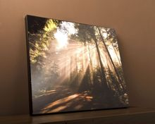 Forrest sunburst wall art