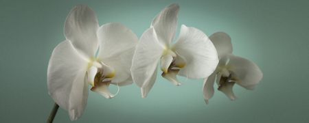 Graham & Brown Teal orchid wall art
