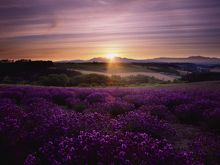 Lavender sunset wall art