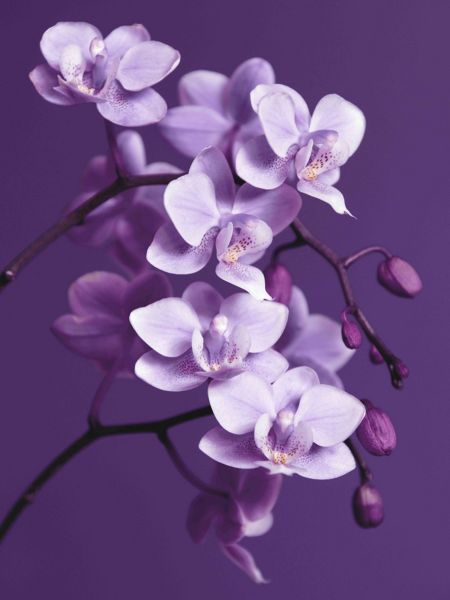 Graham & Brown Purple orchid wall art