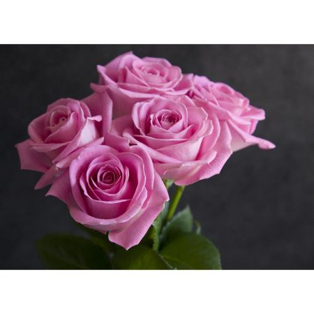 Graham & Brown Pink roses wallart