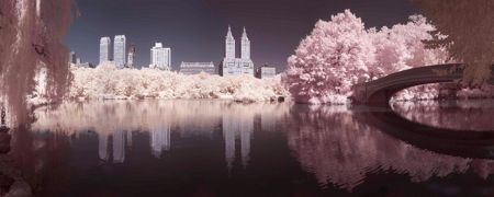 Graham & Brown Pink Central Park Printed Canvas