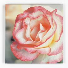 Graham & Brown Petal Rose Glitter Printed Canvas