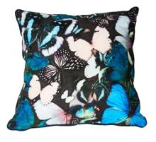 Blue curio butterfly cushion