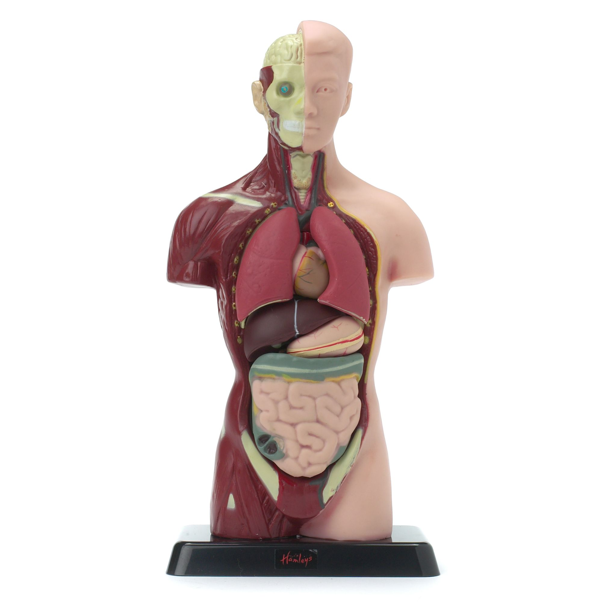 Anatomy set
