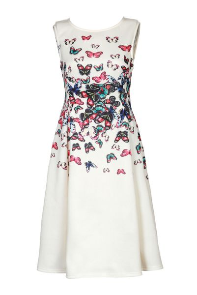 Jolie Moi Butterfly Print Fit & Flare Dress