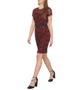 Dorothy Perkins Petite Lace Pencil Dress