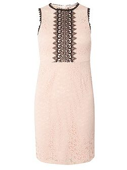 Petite Lace Dress