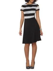 Dorothy Perkins Tall Stripe Lace Dress
