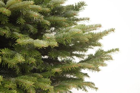Floric Super Deluxe Nordmann Fir Christmas Tree 210-240c