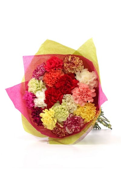 Floric Colourful standard carnations
