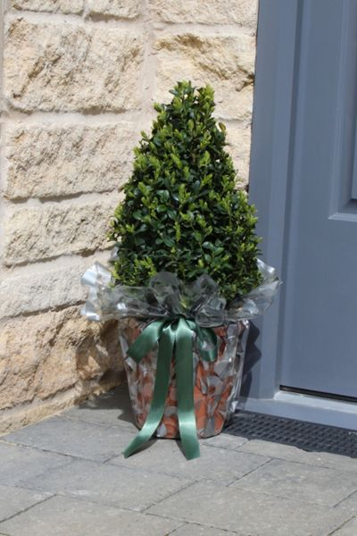 Floric Buxus topiary pyramids, matched pair