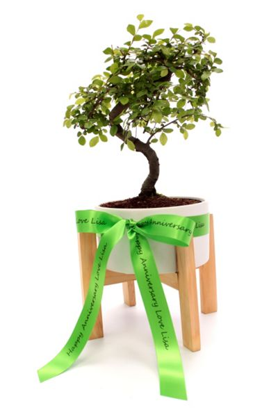 Floric Bonsai tree