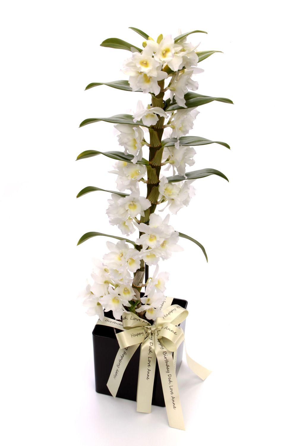Image of Floric Dendrobium orchid cube