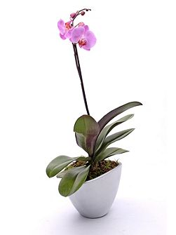 Single spike orchid ceramic