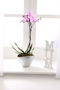 Floric Single spike orchid ceramic
