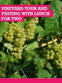 Buyagift Chilford Hall Vineyard Tour and Tasting For Two