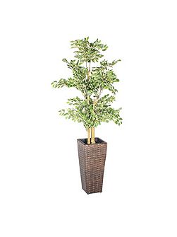 Square rattan planter 60cm with plastic inlay