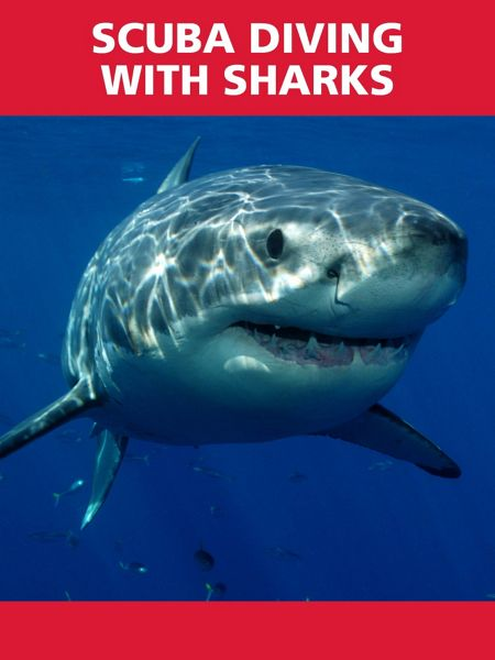 Red Letter Days Scuba Diving with Sharks