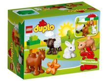 Farm animals - 10522