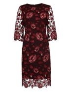 Phase Eight Belle Lace Dress